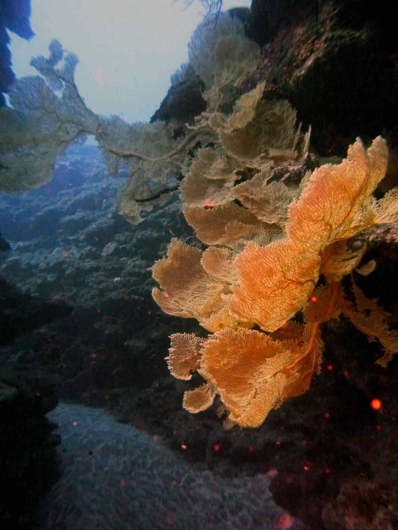 La Cheminée - Bulle d'air Plongée - Ile de la Réunion