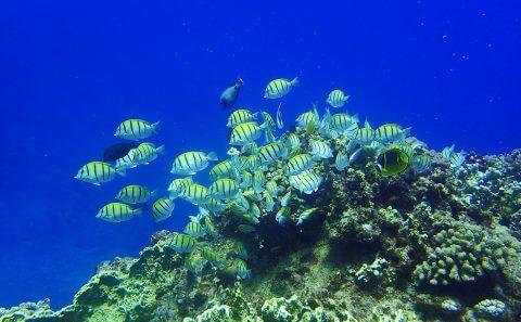 Matinée de rêve - Plongée sur Ile de la Réunion 974 - Bulle d'Air
